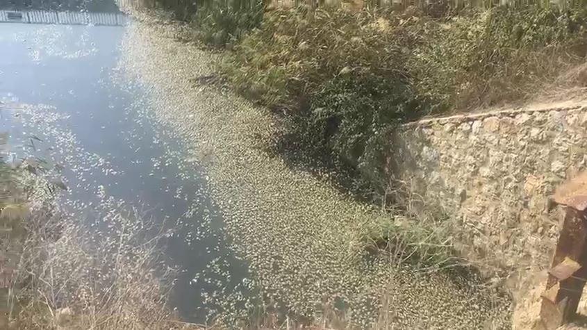 Bursa'da, deredeki yüzlerce balık öldü, köylüler tedirgin