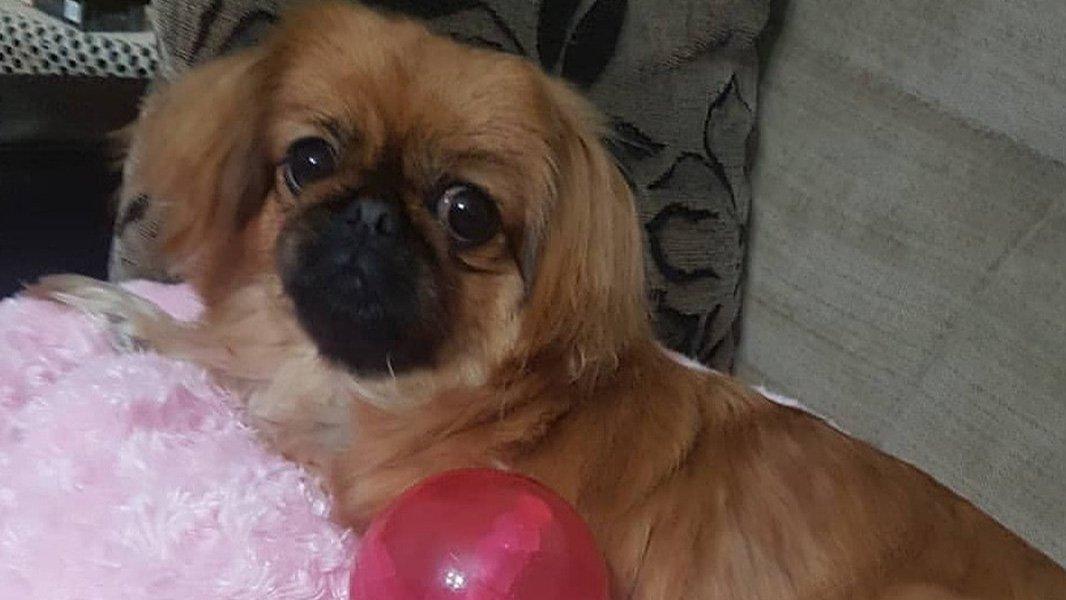 Köpeği için başlattığı hukuk mücadelesini 1,5 yıldır sürdürüyor