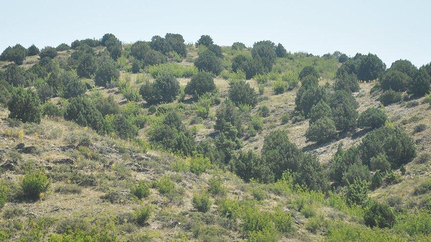 Eskişehir'de maden uğruna 400 bin ağaç katledilecek!