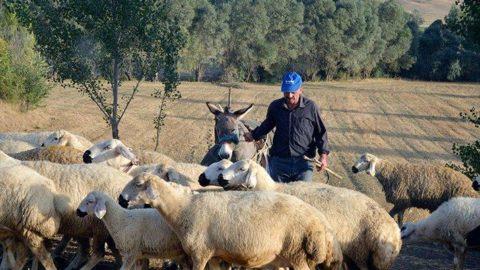Tarım ve hayvancılıkta 2020 destekleme miktarları belirlendi