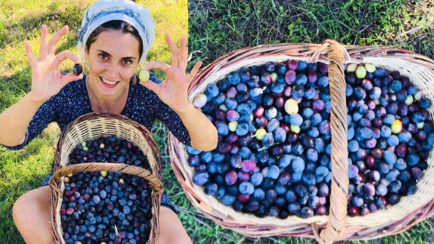 İstanbul'dan kaçıp Ege'ye yerleşmişti... Aslıhan Gürbüz zeytin hasadına başladı