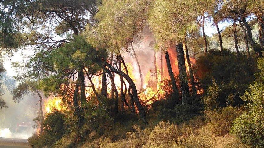 İstanbul'daki orman yangınlarının tamamı insan kaynaklı