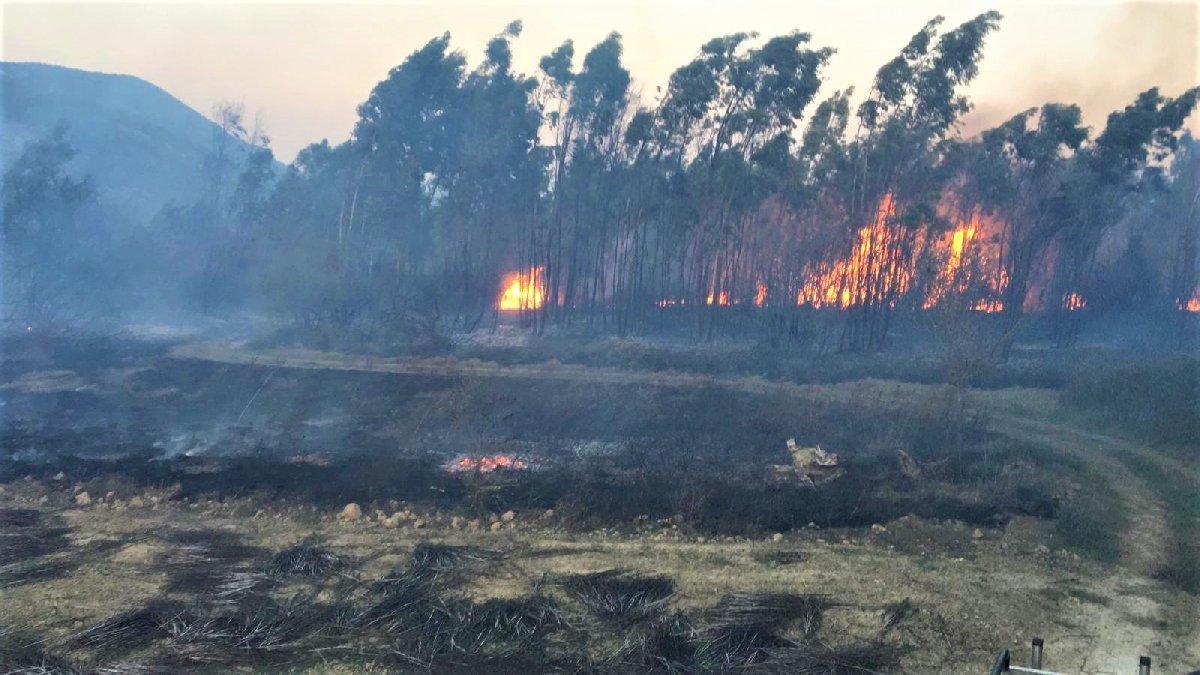 Muğla'da farklı noktalarda aynı anda yangınlar