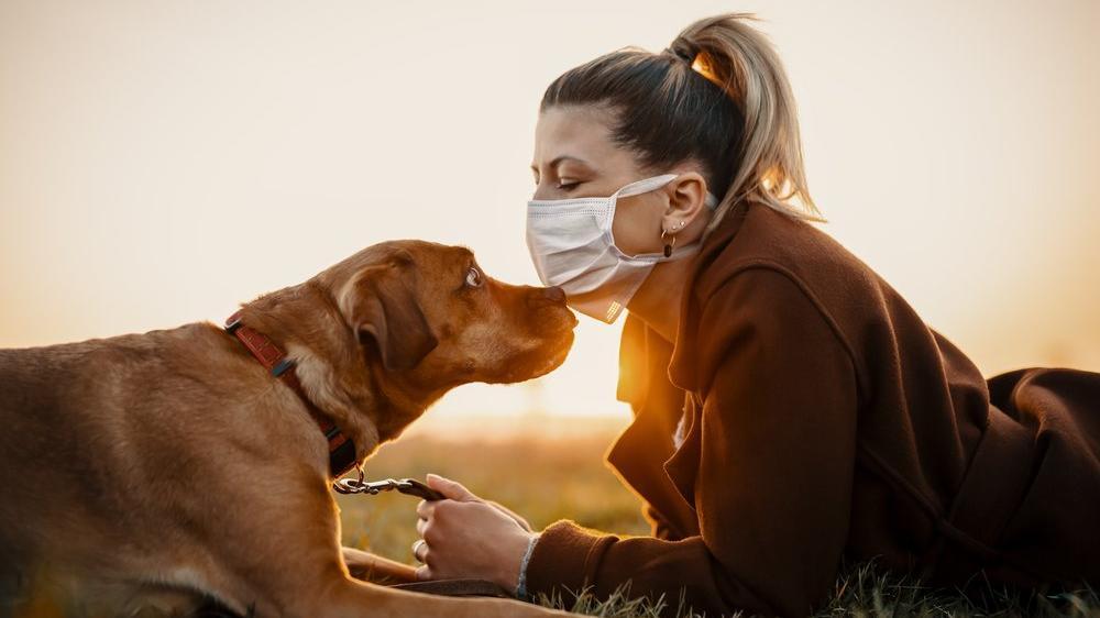 Bilim insanlarından köpek sahiplerine corona uyarısı: Risk daha fazla