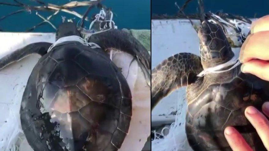 Çöplere dolanan yavru caretta carettayı balıkçılar kurtardı