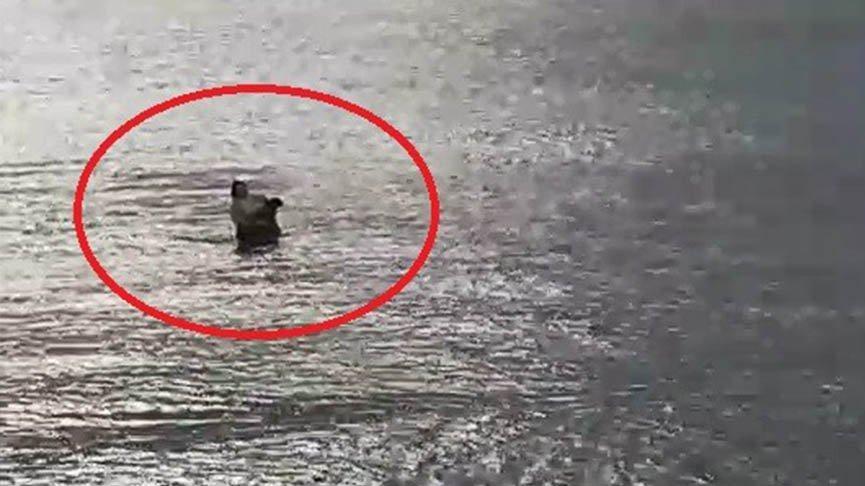 Boğulan köpeği kıyafetleriyle denize atlayarak kurtardı