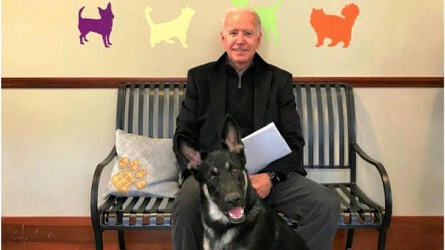 Joe Biden köpeğiyle oynarken düştü: Bileğini çatlattı