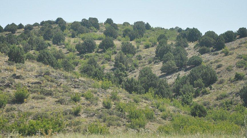 400 bin ağaç ve kızıl geyikler kurtuldu