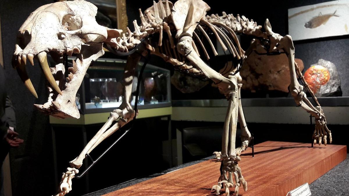 40 milyon yaşındaki iskelet açık artırmada