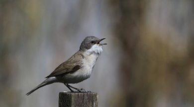 Düşük maaş zammı alanlar kuş sesi dinlesin