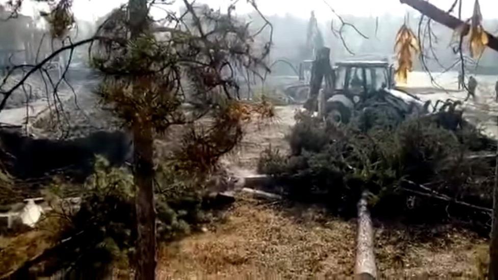 Sokağa çıkma yasağını fırsat bilip ağaçları böyle kestiler