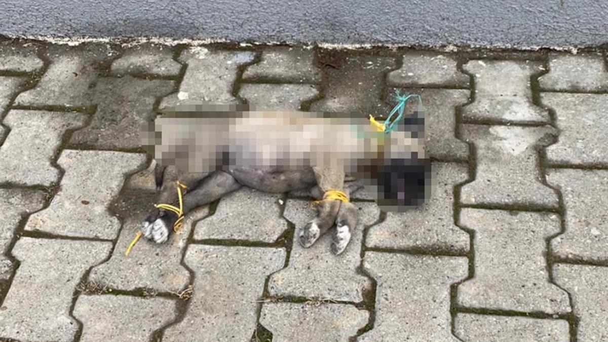 Vahşet! Ayakları ve boynunu bağlayıp öldürmüşler