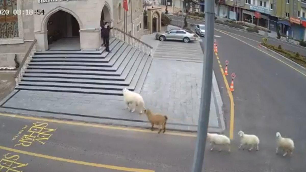 'Bir koç, bir keçi ve üç koyun tarafından esir alındık'