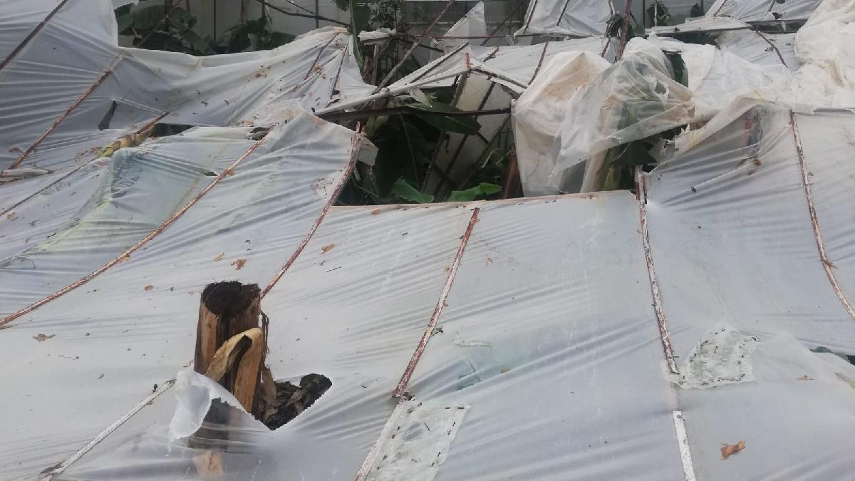 Mersin'de şiddetli fırtına muz seralarını vurdu