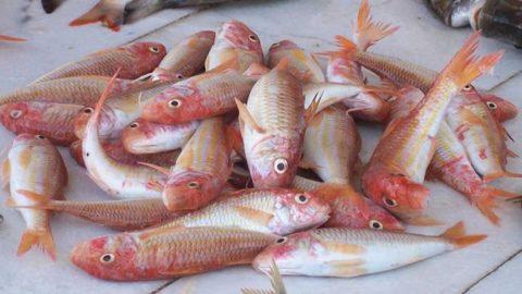 Bağışıklık için balık yiyin