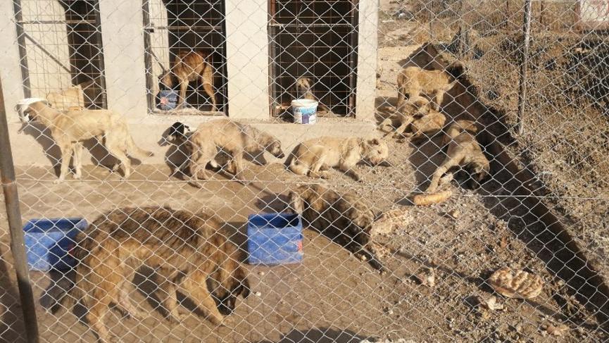 29 köpek boş arazide baygın halde bulundu