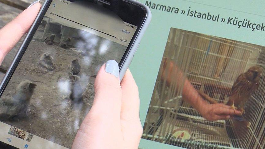 Yaban hayvanlarını internette satıyorlar!
