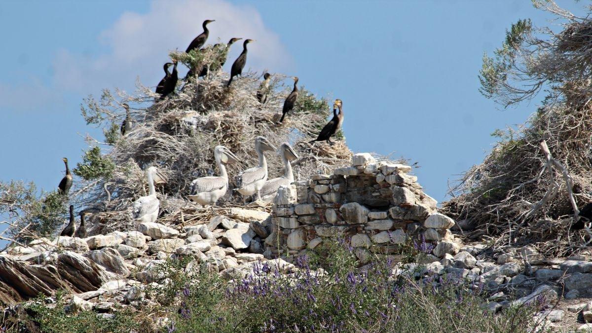 Yaban kuşlarının üreme alanı kaçak kazı alanı oldu