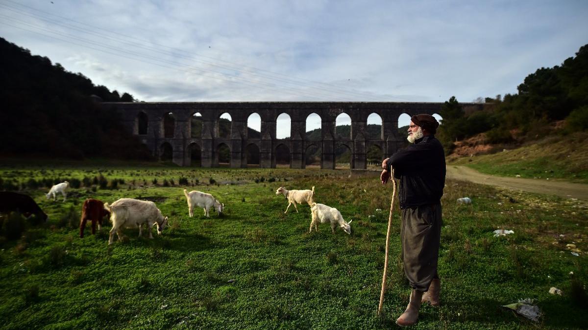 Balıkların yüzdüğü baraj, koyunlara kaldı