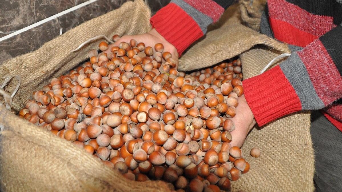 Fındık ihracatı yüzde 36 düştü