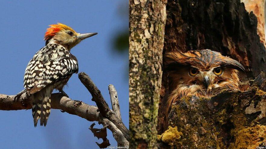 2020'de dünyada en çok kuş türünü, bir Türk gördü