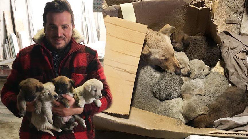 Sokak köpeği ile 6 yavrusunu donmaktan kurtardı