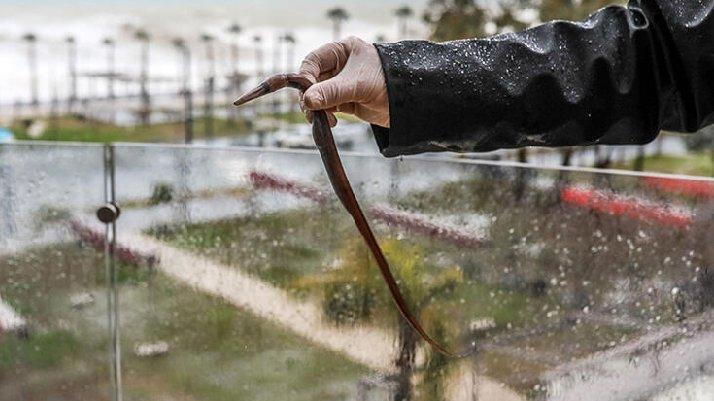 Antalya'da akılalmaz olay: Fırtına balığı balkona fırlattı