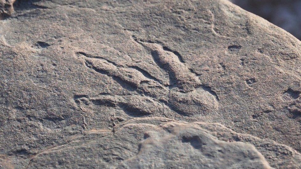 Küçük çocuk dinozor ayak izi keşfetti