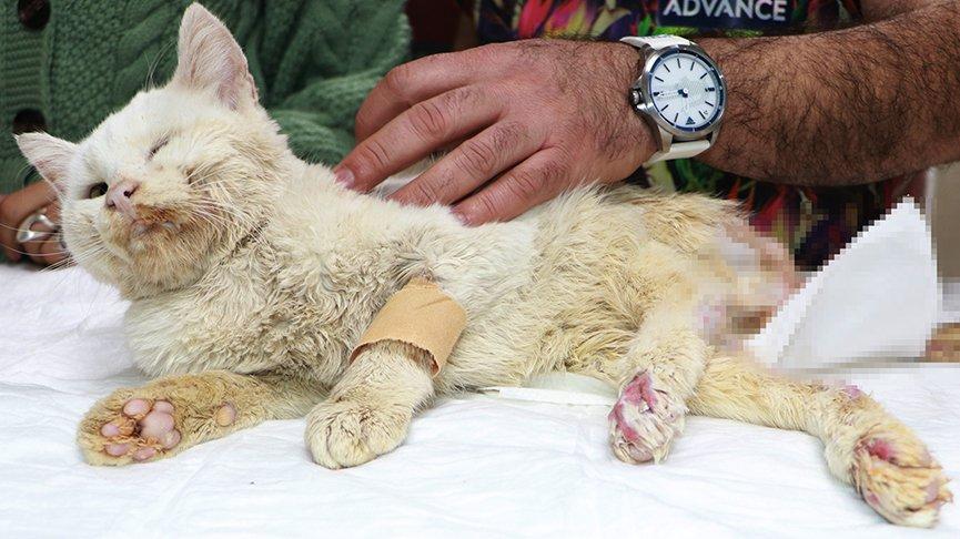 Tüfekle vurulan kedi, yaşam mücadelesi veriyor