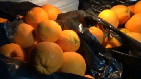 Bagaj ücreti istenince oturup 30 kilo portakalı tek seferde yediler