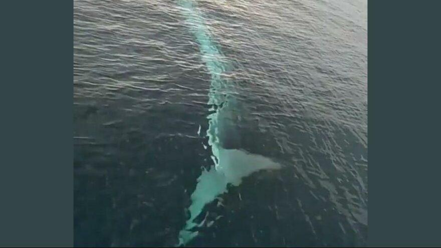 Adana'da 15 metrelik oluklu balina