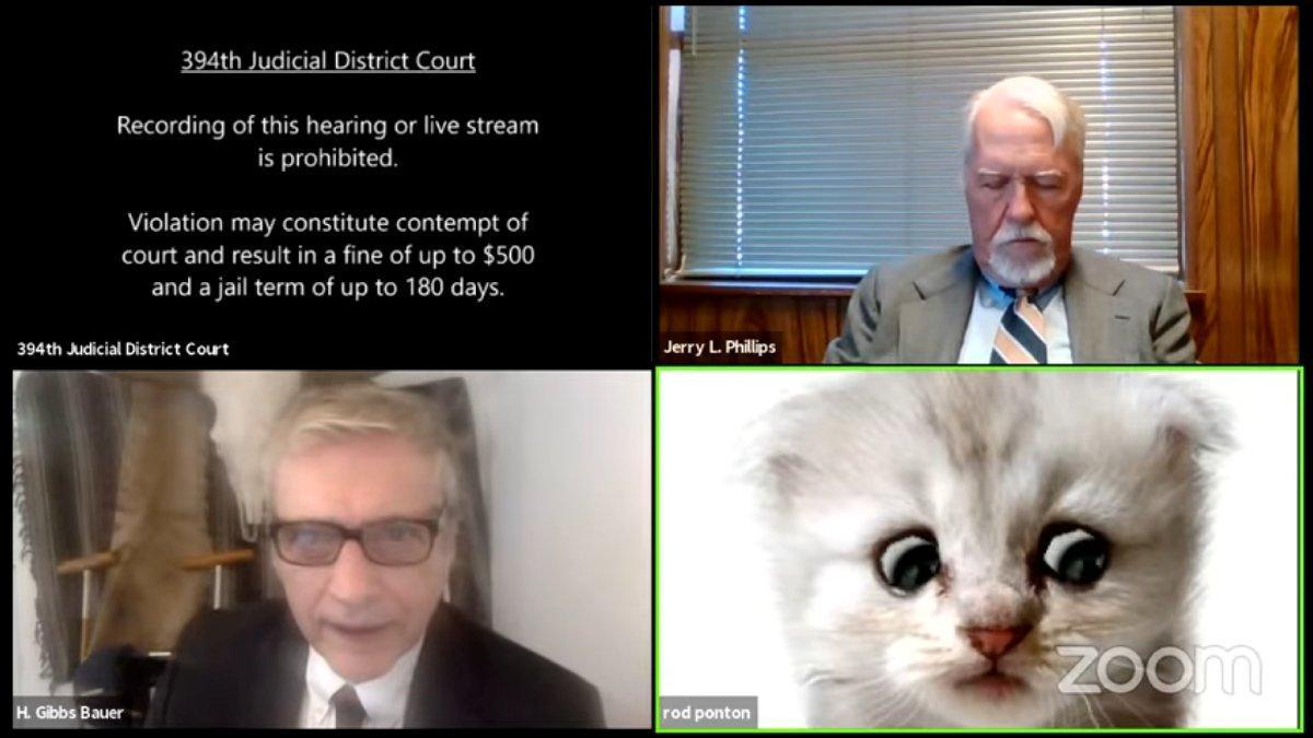 Mahkemede filtre kazası: Avukat kedi olarak katıldı