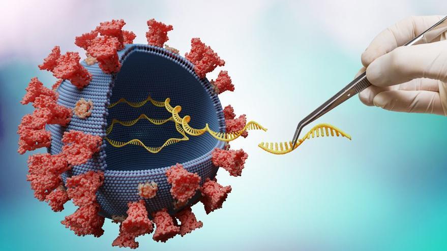 Yeni mutasyonlar nelere yol açabilir?