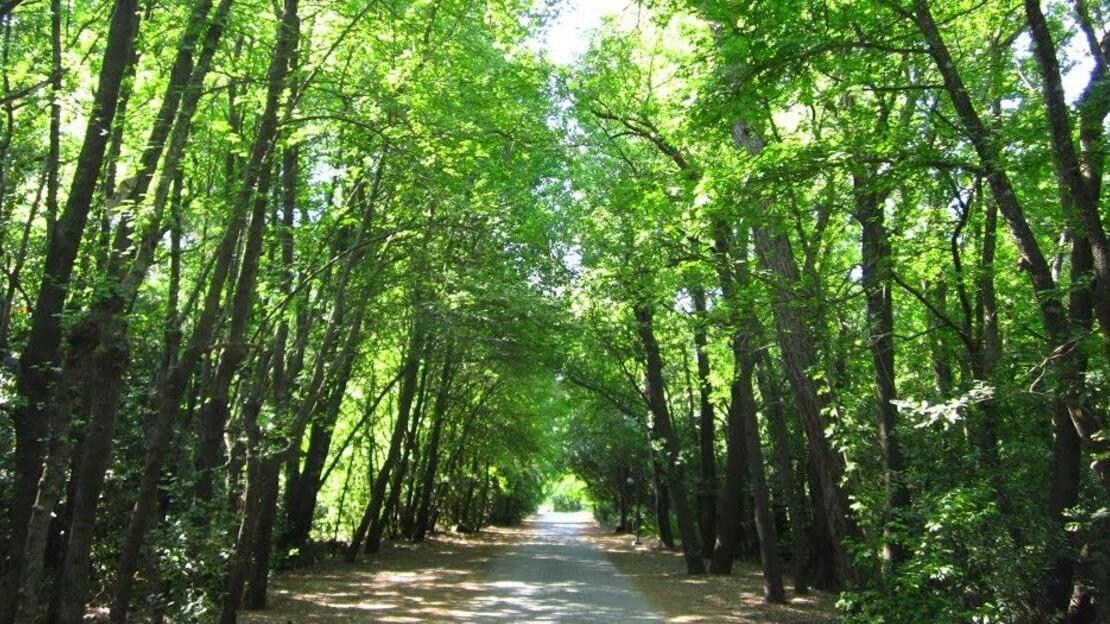 Muğla 'Milli Park' ormanları 'gençleştirme' adı altında kesilebilecek