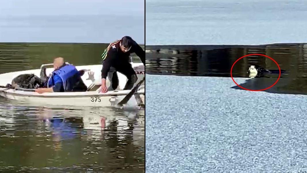 Suya düşen köpeği kurtarmak için seferber oldular