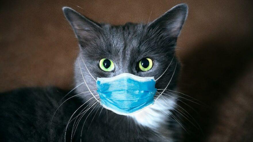 Bugün Dünya Kediler Günü: Kediler günü nedir?