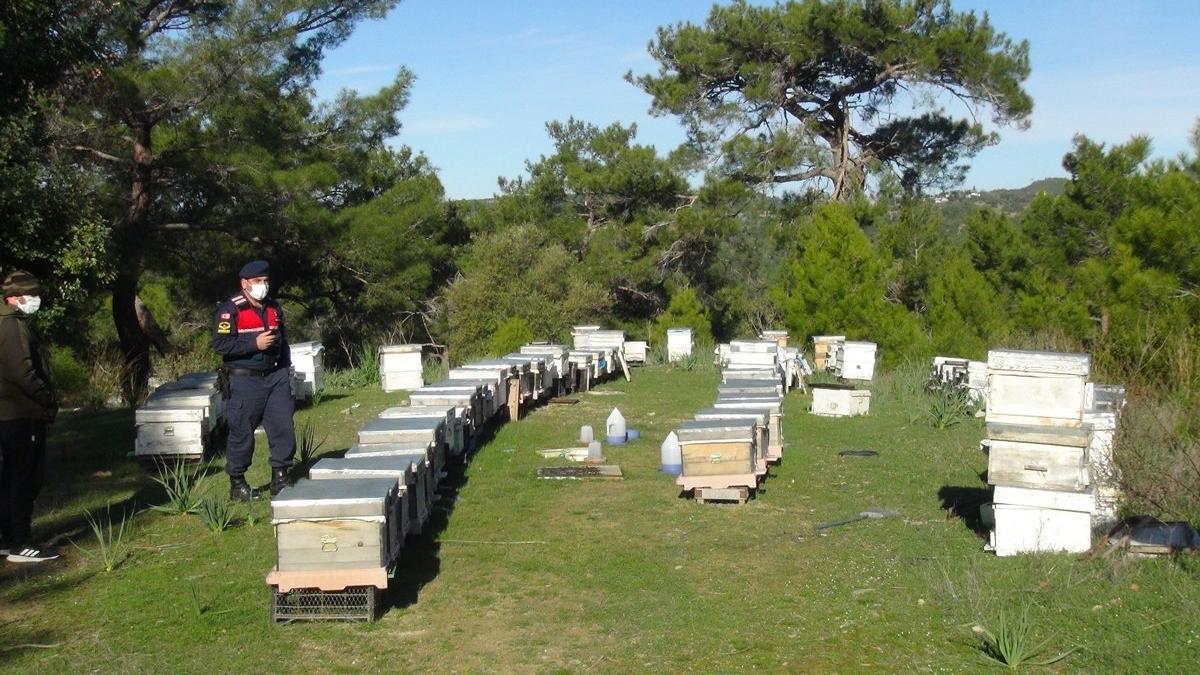 Dedektif gibi iz sürdü, Konya'dan çalınan arılarını Manavgat'a buldu