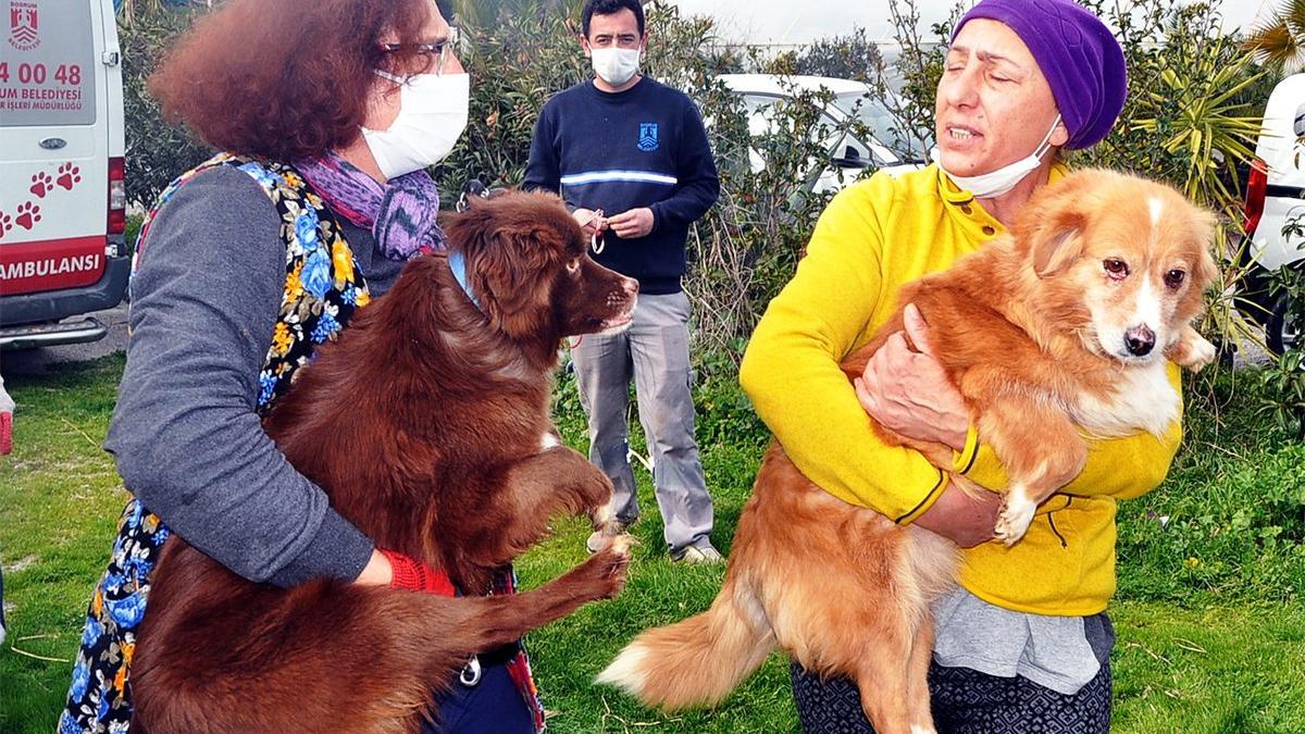 Yıllardır esaret altında tutulan 48 kedi ve köpeği hayvanseverler kurtardı