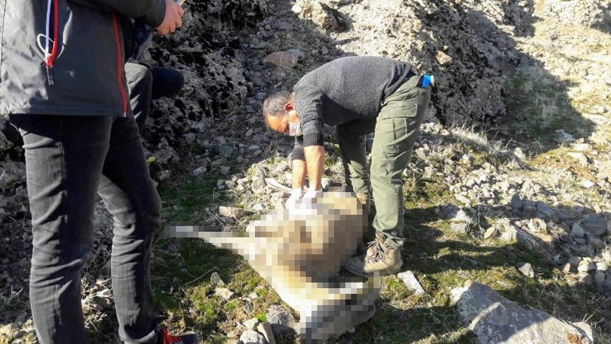 Koruma altındaki dağ keçilerinde veba hastalığı tespit edildi