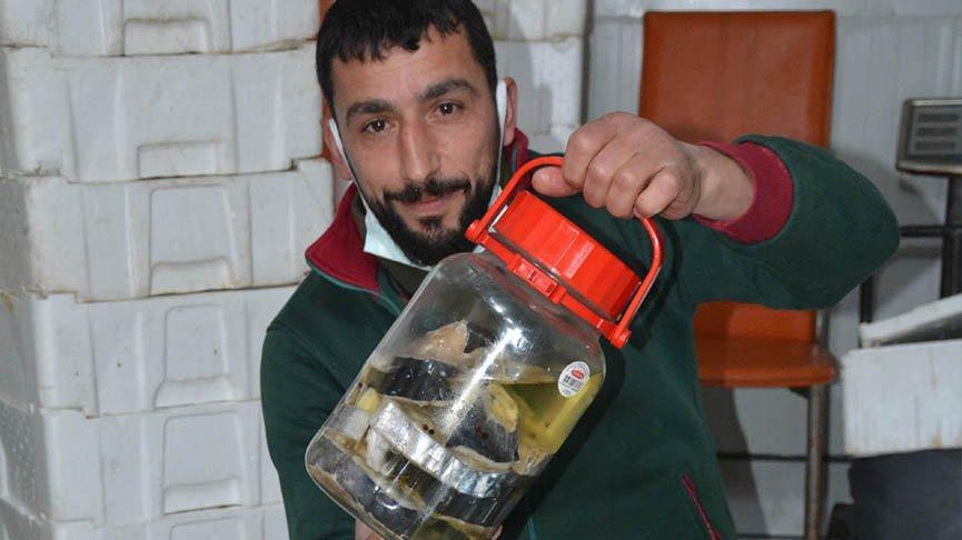 Balıkçılar, kavanozu 350 lira olan lakerda taleplerine yetişemiyor