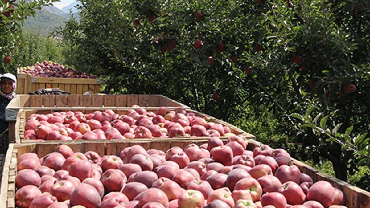 CHP'li Özgür Ceylan: Hasat başlayacak, depolar elma dolu