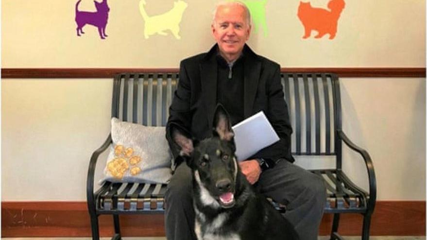 Biden'ın köpeği ortalığı karıştırdı: Çalışanları ısırınca Beyaz Saray'dan gönderdi