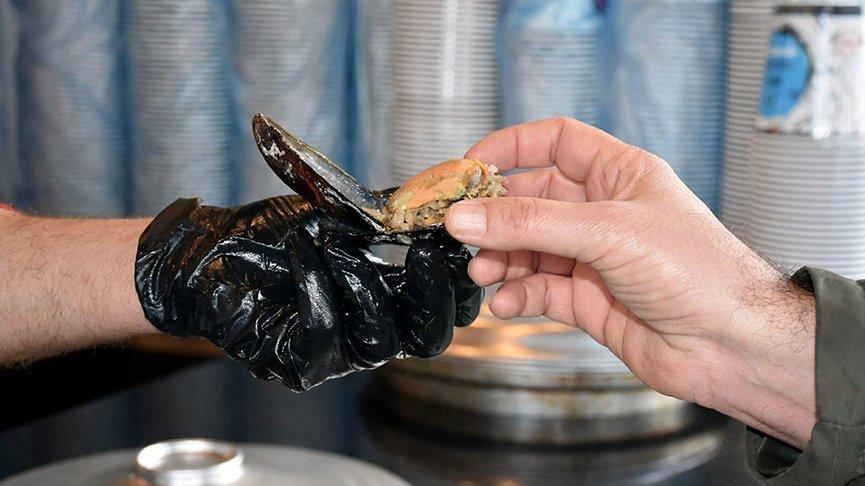 Gıda Mühendisleri Odası'ndan midye uyarısı