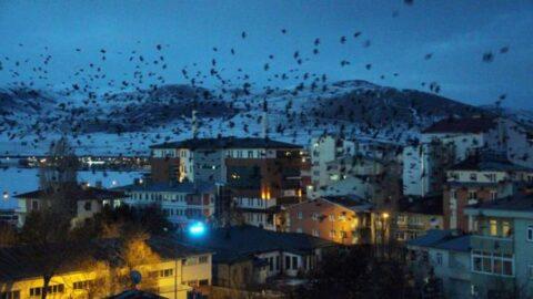 Gece gökyüzüne bakanlar gözlerine inanamadı! Şehri istila ettiler