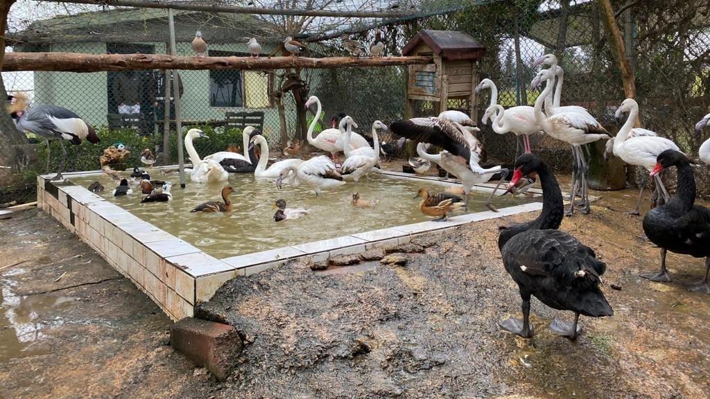 'Kaçak kuş' operasyonu: 185 canlı hayvan ele geçirildi