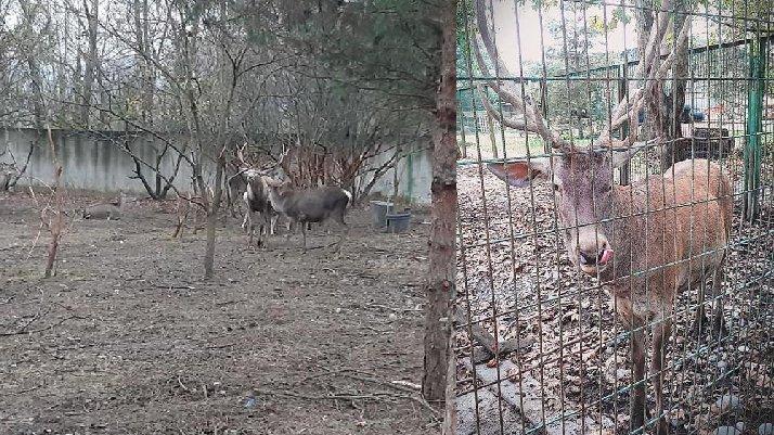 Hayvanat bahçesindeki geyiği çalıp yediler