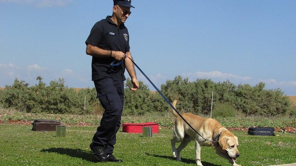 Corona virüsünü köpekler bulacak