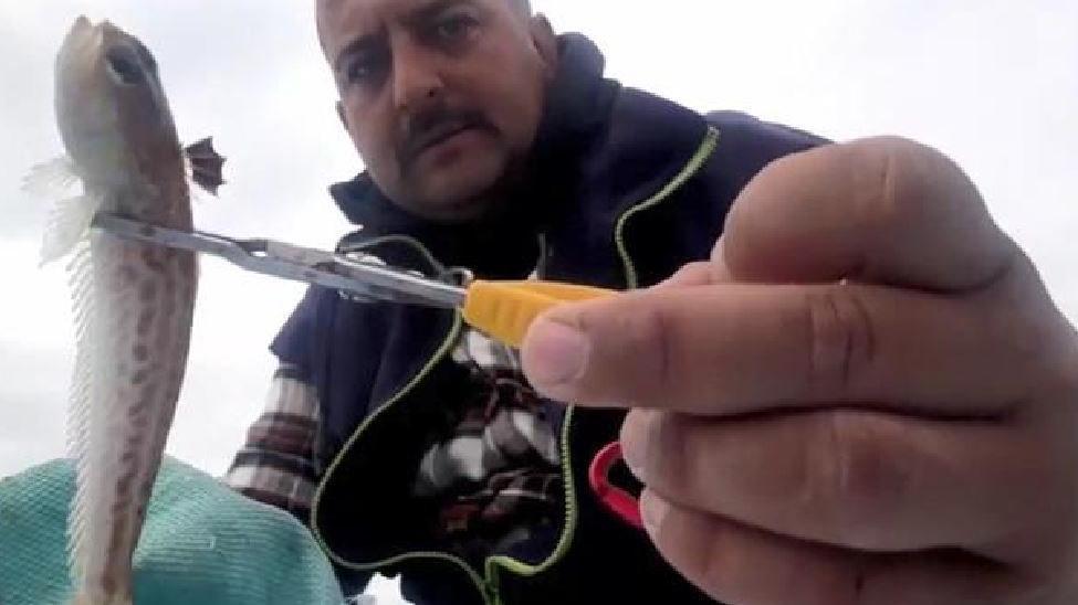 Zehirli balıkla temas hastanelik etti