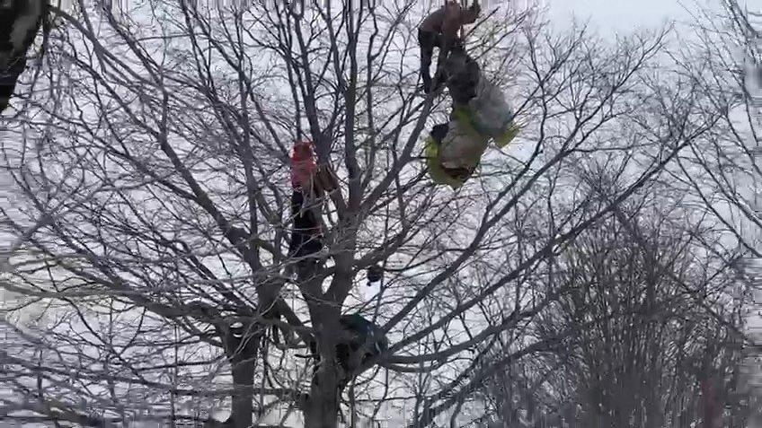 Paraşütle düşen vatandaş ağaçta mahsur kaldı