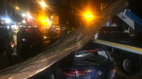 İstanbul'da ağaç otomobilin üzerine devrildi